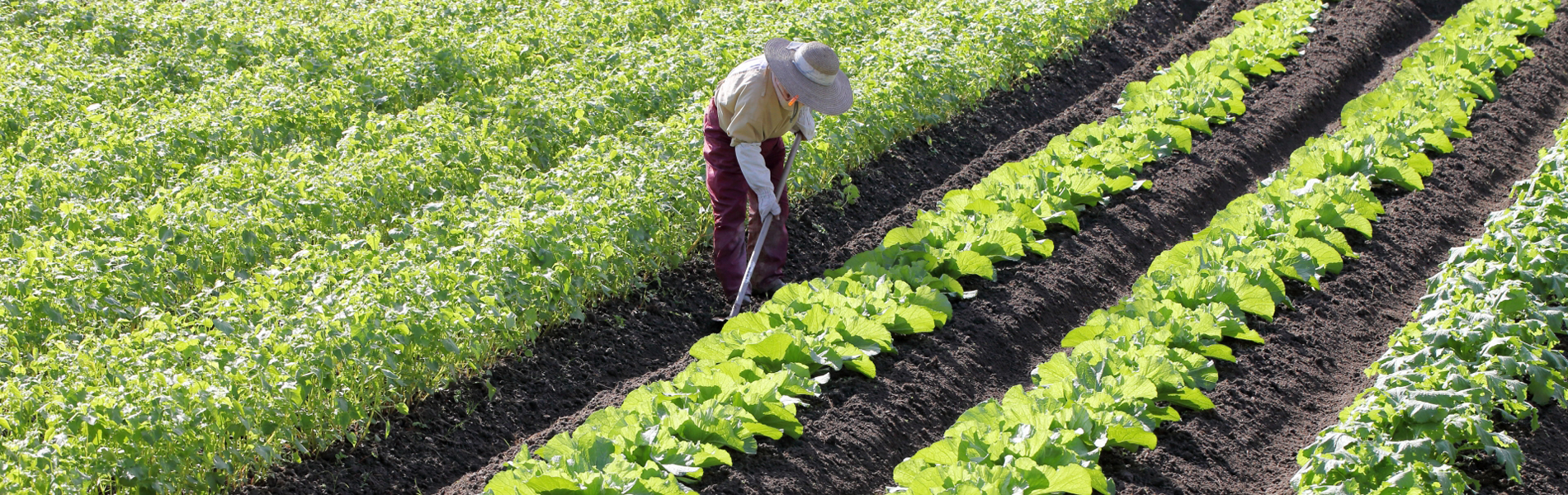週に1回、生産地より届く農畜産物